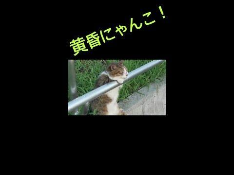 【猫 ビックリ 可愛い】猫っぽくない猫に注目!! (видео)