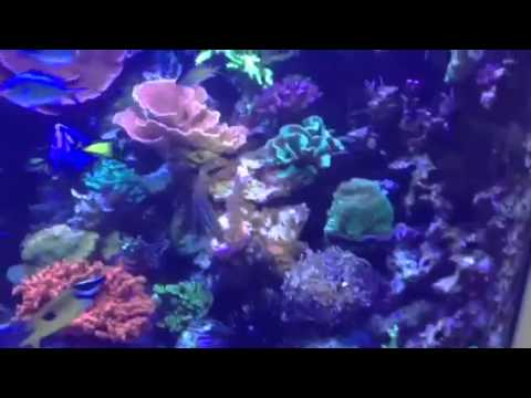 Portfolio Video 13