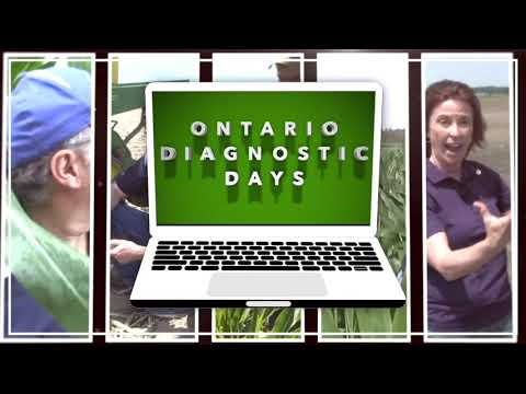 Ontario Diagnostic Days, Ep 4: Soil management snippets for healthy and productive soils