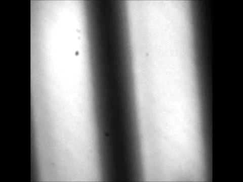 A Label-Free Microfluidic Assay to quantitatively study antibiotic diffusion through lipid membranes