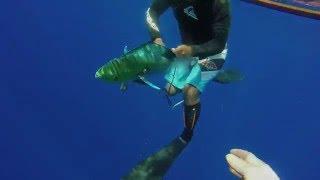 Peter Langneo spearing dophin fish(koko in Marshallese)behind eneko islet,majuro atoll dec 2015.