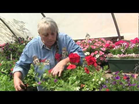 How to make a flower hanging basket