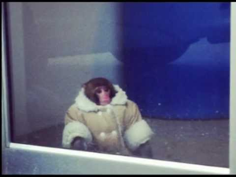 Ikea Monkey - Subulussalam