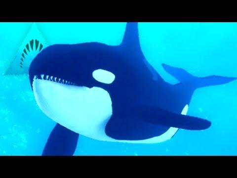 Killer Whale Eats Divers! - Depth | Ep10 HD