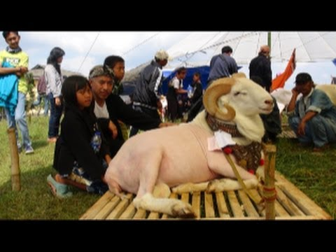 Kontes dan Seni Ketangkasan Domba Garut Paguyuban 30 Fapet Unpad 2014