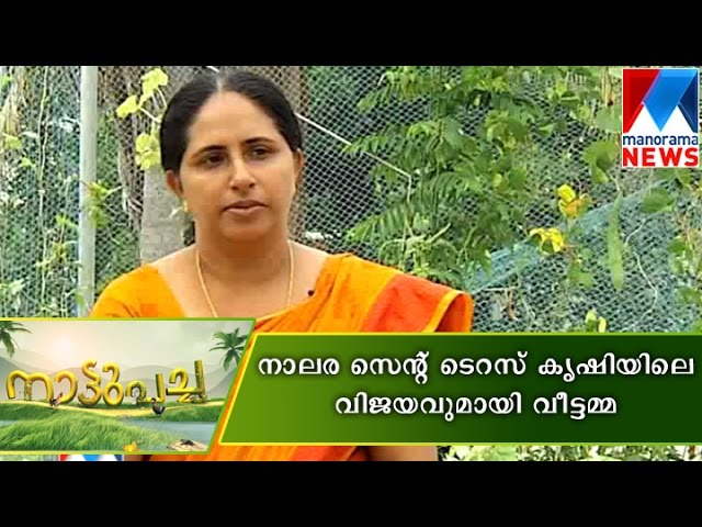 Jessi james success story in terrace farming manorama news for Terrace krishi