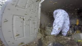 Mężczyzna otworzył drzwi i zamarł. Dziesiątki tysięcy szerszeni w starej szopie