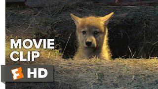Nonton Wolf Totem Movie Clip   I Confess  2015    Shaofeng Feng  Shawn Dou Adventure Hd Film Subtitle Indonesia Streaming Movie Download