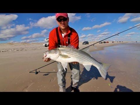 Striped Bass – NJ Surf Fishing May 2013