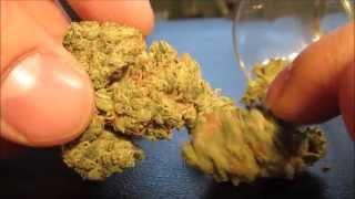 Whyy Sativa?? - Gool Ol Jack - Herb & Shatter by Asight4soreeyez