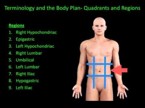 Quadrants, Regions, Body Planes