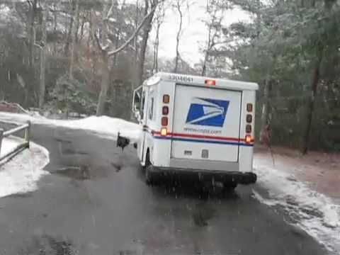 Massachusetts Mail Man - For some reason a wild turkey has been attacking a mail truck in a Centerville neighborhood. Check out this fowl footage of the mad bird in action. Ethel Ken...