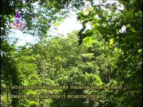 โครงการอนุรักษ์พันธุกรรมพืช อันเนื่องมาจากพระราชดำริ21