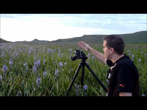 Landscape Photography Tips: Wildflower Sunrise in Idaho