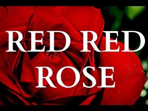 ♫ Scottish Music - My Love Is Like A Red Red Rose (LYRICS) ♫