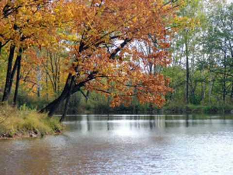 Осенняя мелодия (Сентябрь-2009).wmv (видео)