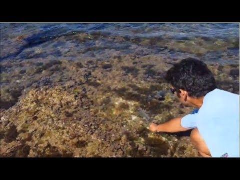 pesca A FONDO o rock fishing RILASCI di saraghi e ORATE che vanno dai 3 ai 5 etti e ne vado fiero!