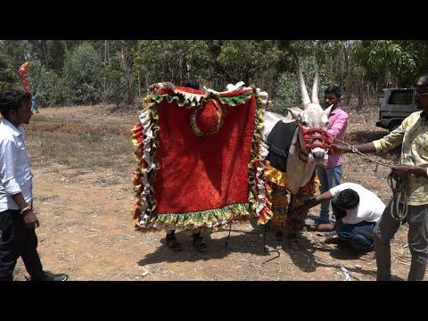 Hulginkoppada Nayaka Decoration ! Hallikar bull bail pola ! Hori habba Jallikattu