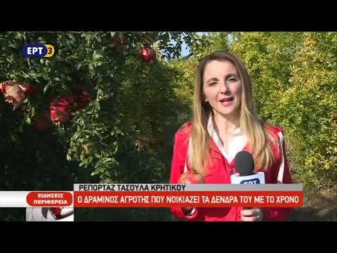 Δραμινός αγρότης νοικιάζει τα δέντρα του με το χρόνο | 17/10/2018 | ΕΡΤ