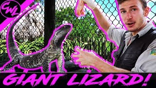Video GIANT LIZARD, BABY BOBCAT, AND MORE! MP3, 3GP, MP4, WEBM, AVI, FLV Agustus 2019