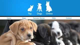 #ThinkBeforeYouClick Dogs Trust UK Campaign - illegal puppy farming and trafficking awareness