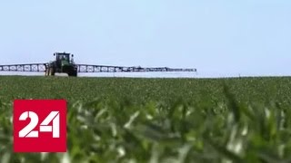 """Агроновости"": урожай кукурузы"