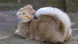 Video SUPER FUNNY ANIMALS! - Try not to LAUGH or SMILE, IMPOSSIBLE! MP3, 3GP, MP4, WEBM, AVI, FLV Maret 2018