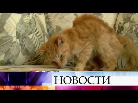 В США после 15 лет разлуки хозяин нашел своего кота.