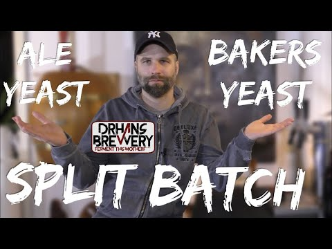 Brewers Yeast VS Bakers Yeast - Part 1 Fermentation