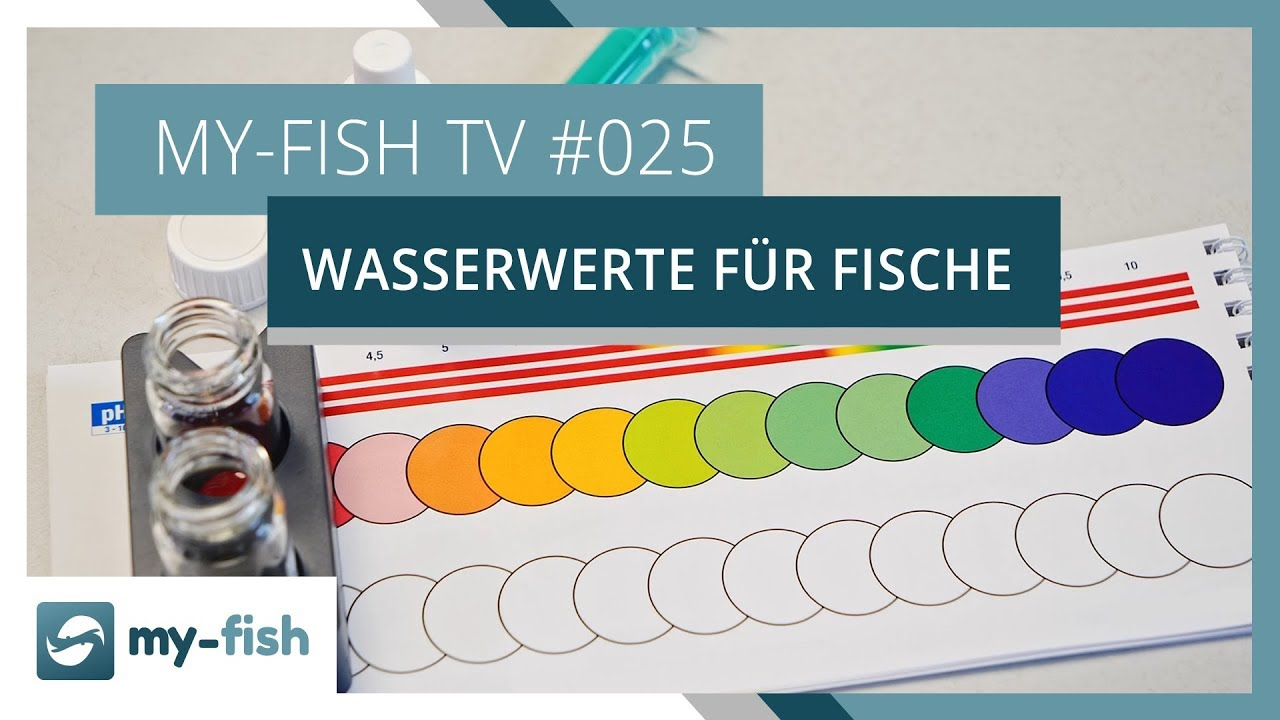 my-fish TV - Deine Nr. 1 Anlaufstelle für alle Themen rund um die Aquaristik 39