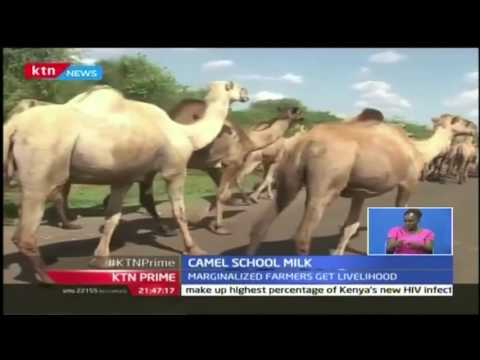 KTN Prime: Dairy Experts are discussing fresh avenues to increase milk production in the country