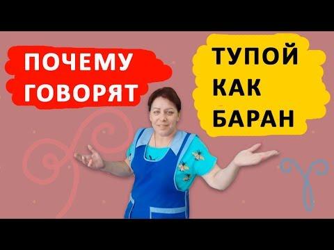 Адреналин. \Тупой как баран\ — почему так говорят - DomaVideo.Ru