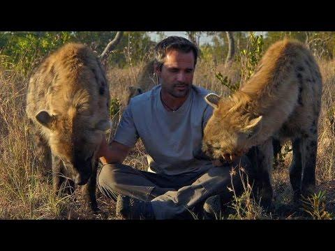 Why do Hyenas laugh?