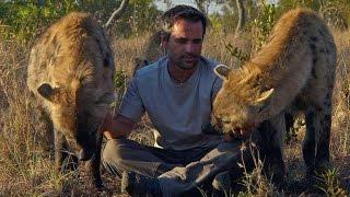 Spotted Hyena - Communication