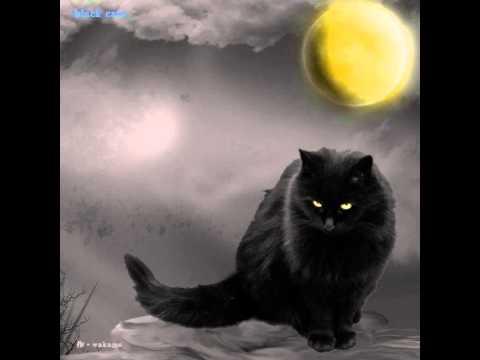 Black Cats - 3  三つ数えろ