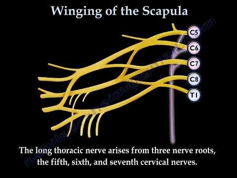 Scapular winging sports orthobullets com