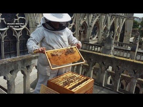 Παναγία των Παρισίων: Γλίτωσαν από τη φωτιά οι μέλισσες!…