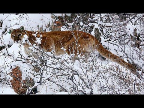 Τσεχία: Τον κατασπάραξε το λιοντάρι που είχε σπίτι του