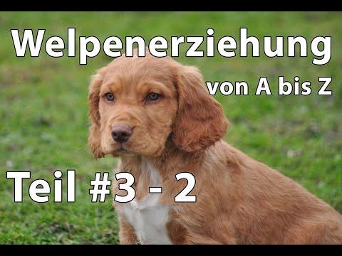 Hunde: Welpenerziehung Teil #3 - 2