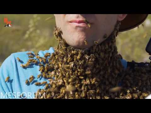 Brave Wilderness - 3000 BEES ATTACK MY FACE! (but only when they say BEES)