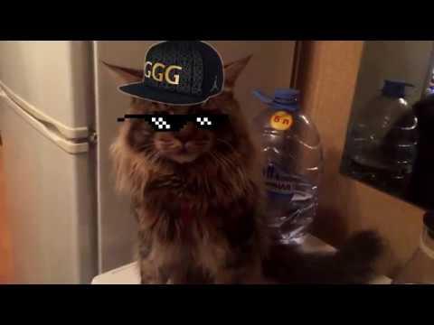 Смешной кот боксер (видео)