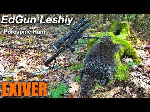 Edgun Leshiy Porcupine hunt (видео)