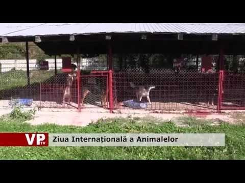 Ziua Internațională a Animalelor