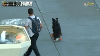 Outside AT&T Park, a gentleman hops off his skateboard while it's in motion and his dog jumps on for a ride along the boardwalkCheck out http://MLB.com/video for more!About MLB.com: Former Commissioner Allan H. (Bud) Selig announced on January 19, 2000, that the 30 Major League Club owners voted unanimously to centralize all of Baseball's Internet operations into an independent technology company. Major League Baseball Advanced Media (MLBAM) was formed and charged with developing, building and managing the most comprehensive baseball experience available on the Internet. In August 2002, MLB.com streamed the first-ever live full length MLB game over the Internet when the Texas Rangers and New York Yankees faced off at Yankee Stadium. Since that time, millions of baseball fans around the world have subscribed to MLB.TV, the live video streaming product that airs every game in HD to nearly 400 different devices. MLB.com also provides an array of mobile apps for fans to choose from, including At Bat, the highest-grossing iOS sports app of all-time. MLB.com also provides fans with a stable of Club beat reporters and award-winning national columnists, the largest contingent of baseball reporters under one roof, that deliver over 100 original articles every day. MLB.com also offers extensive historical information and footage, online ticket sales, official baseball merchandise, authenticated memorabilia and collectibles and fantasy games.Major League Baseball consists of 30 teams split between the American and National Leagues. The American League consists of the following teams: Baltimore Orioles; Boston Red Sox; Chicago White Sox; Cleveland Indians; Detroit Tigers; Houston Astros; Kansas City Royals; Los Angeles Angels ; Minnesota Twins; New York Yankees; Oakland Athletics; Seattle Mariners; Tampa Bay Rays; Texas Rangers; and Toronto Blue Jays. The National League, originally founded in 1876, consists of the following teams: Arizona Diamondbacks; Atlanta Braves; Chicago 