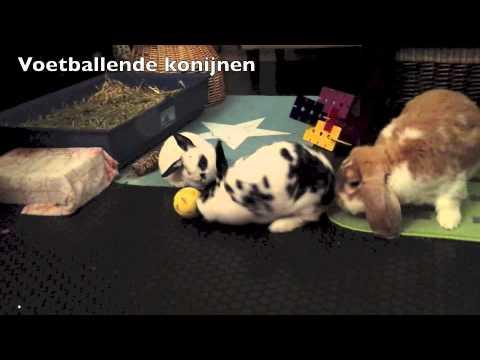 voetballende konijnen