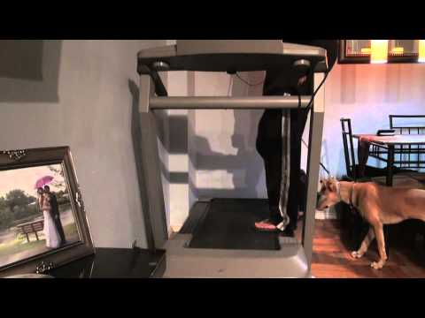 How to: Introduce a dog to the treadmill (DctK9 NYC Dog Training)