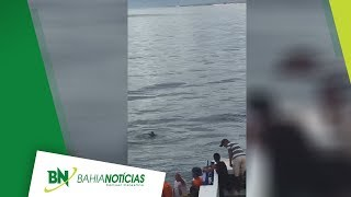 Acesse: http://www.bahianoticias.com.br/ FACEBOOK: https://www.facebook.com/bahianoticias/ INSTAGRAM (@bahianoticias):...