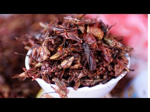 Eating Mexican Grasshoppers | The Food Culture