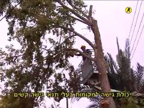 Yosi Mesilati Tree logger infomercial