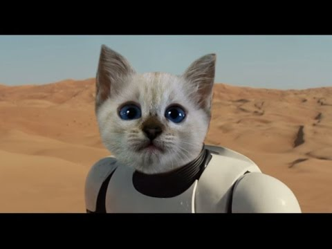 Star Wars The Force Awakens Teaser Trailer - Cat Reaction & Review
